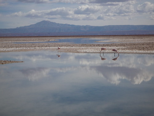Laguna de Chaxa