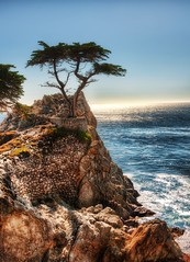 The Lone Cypress - a drive down Highway 1 from...