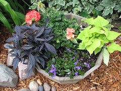 Potted plants, container garden