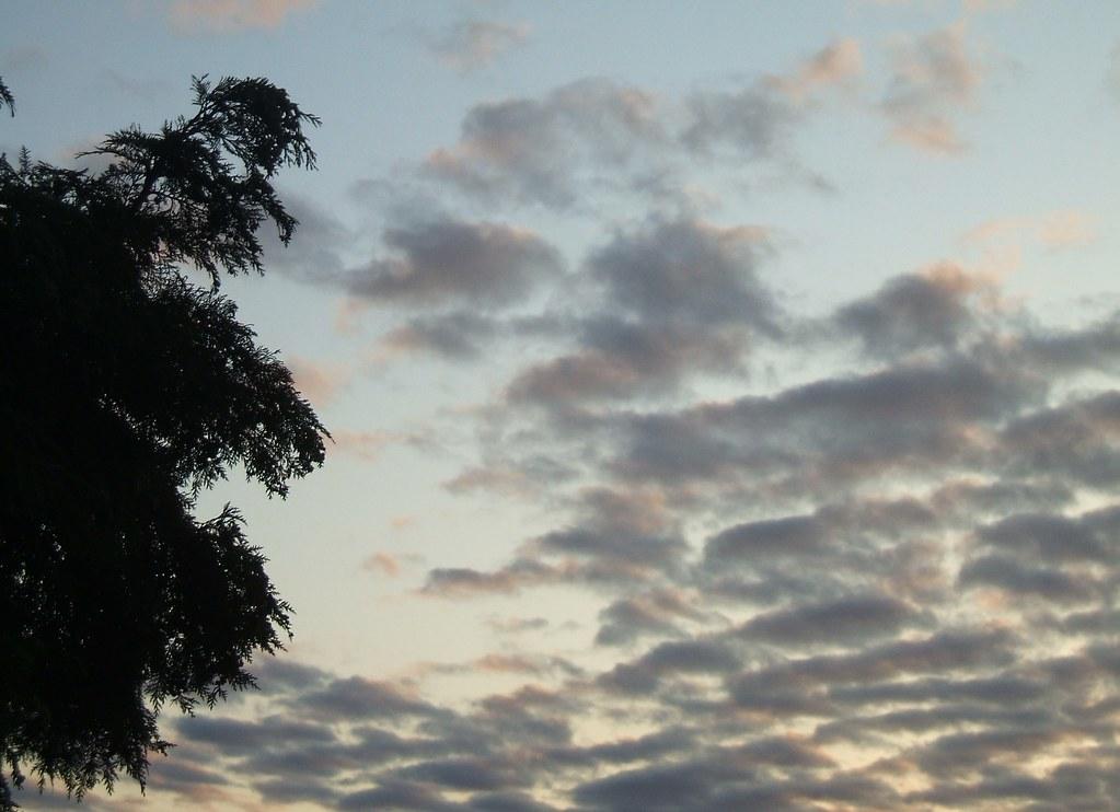 Tree vs. clouds
