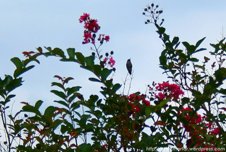 hummingbird flyaway