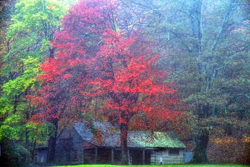 A Log Cabin in Autumn