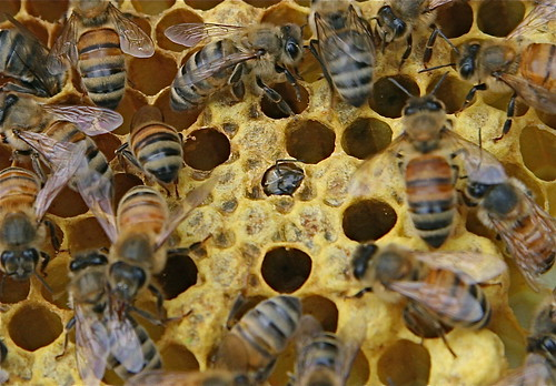 Bee emerging