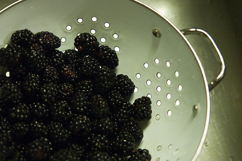 blackberries (by bookgrl)
