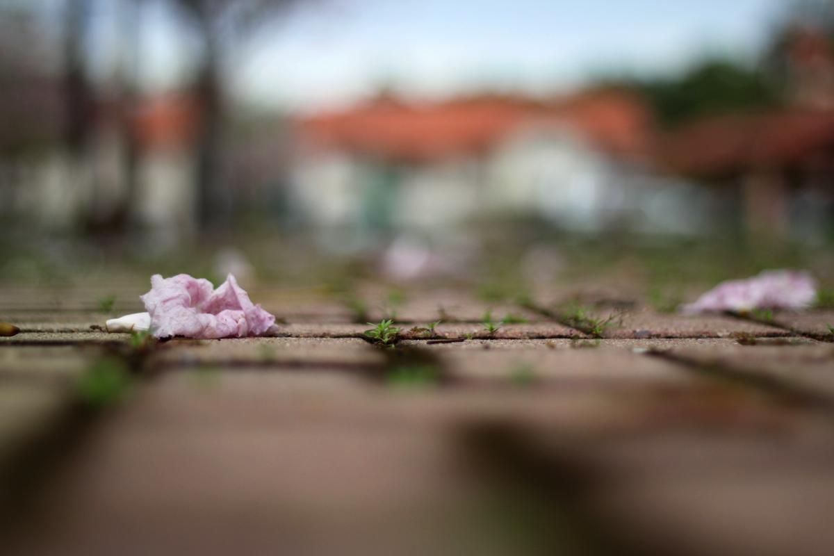 dead spring 2