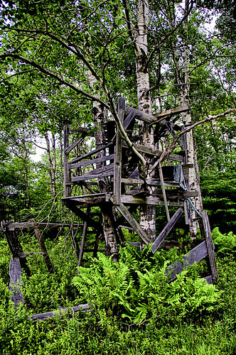 Old Treehouse