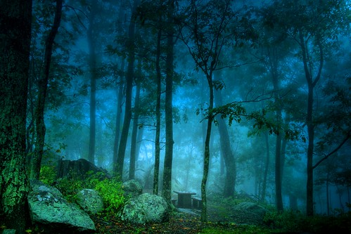 Come Picnic in the Misty Wood