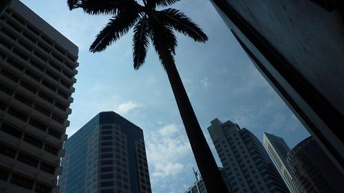 Singapore Hitech Palm