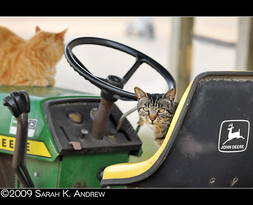Nothing runs like a cat... who just stole your Deere