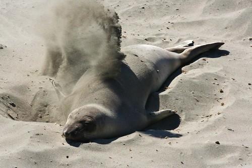 Sand Flipper