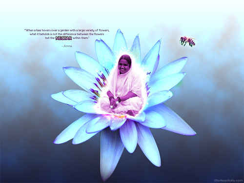 """Amma & Nectar Quote"" inspirational ..."