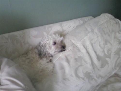 Oscar hiding