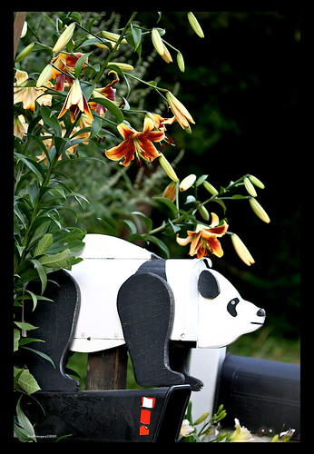 Hybrid Oriental/trumpet lily by my panda mailbox by you.