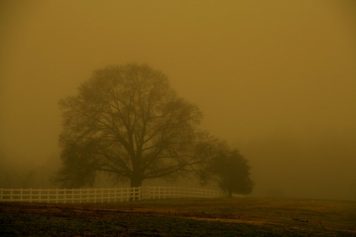 Oak in the Misty Eve