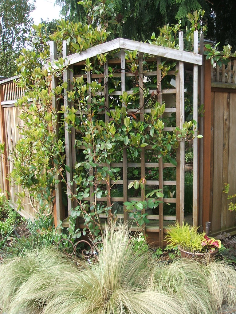 Streetside trellis and Mexican feather grass