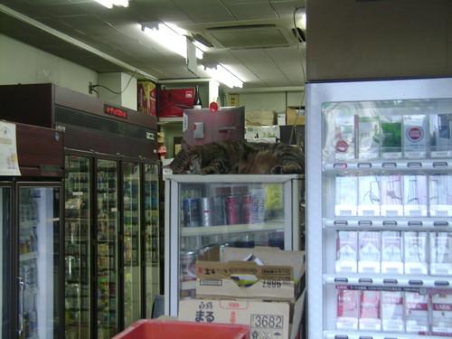 Tokyo Cat :)
