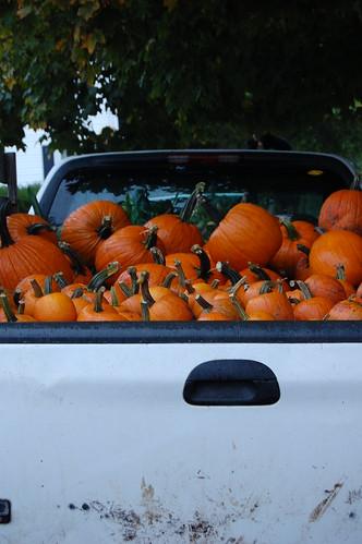 pumpkins in truck