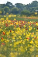 Wild flower meadow (3)