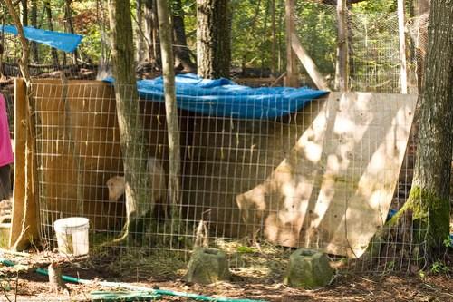 Listeriosis | Humble Garden