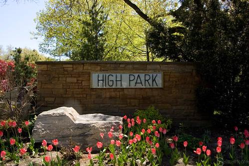 high_park_sakura_tree_48