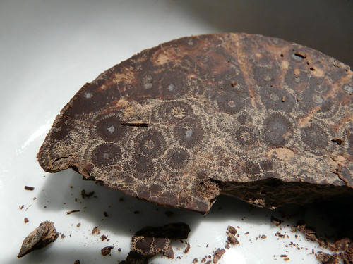 chocolate petoskey