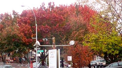 Rainy Day Foliage, 17th St and Terrace Place, Brooklyn, NY, 11/12/2009