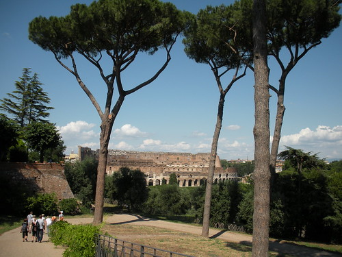 A view of the Colosseum through the umbrella pines from Palantine Hill