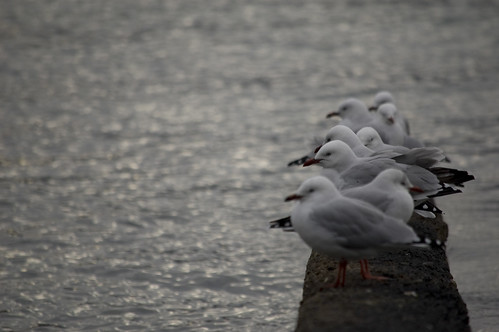Gulls in the Bay by Steph Jennings