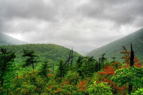 Stormy Wilderness