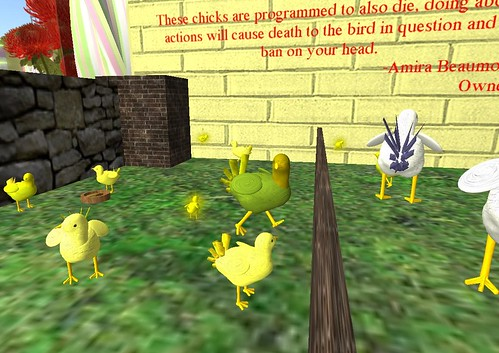 Be free, little chickies!