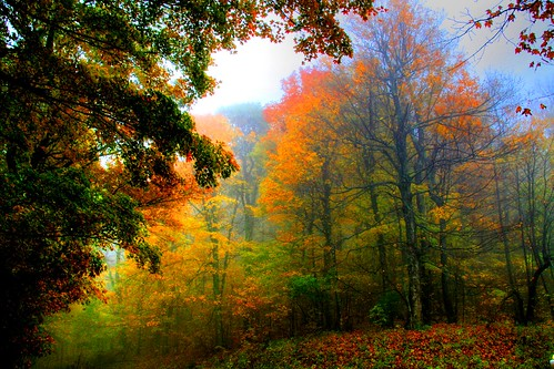 The Misty Forest Light of Fall