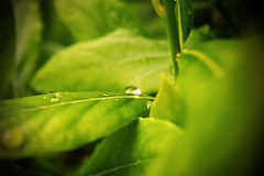 Water droplet on leaves