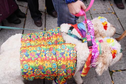 Hippie dogs