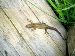 The Lunch Newt at Dalby Forest