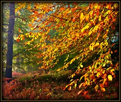 ein sonniger Herbstmorgen