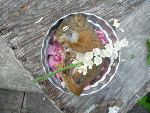 dead squirrel june 2009 055