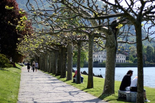 Plane-trees lining the walkway in Villa Melzi Gardens, Bellagio, Lake Como, Italy