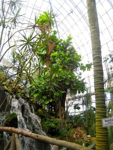 Conservatory Waterfall
