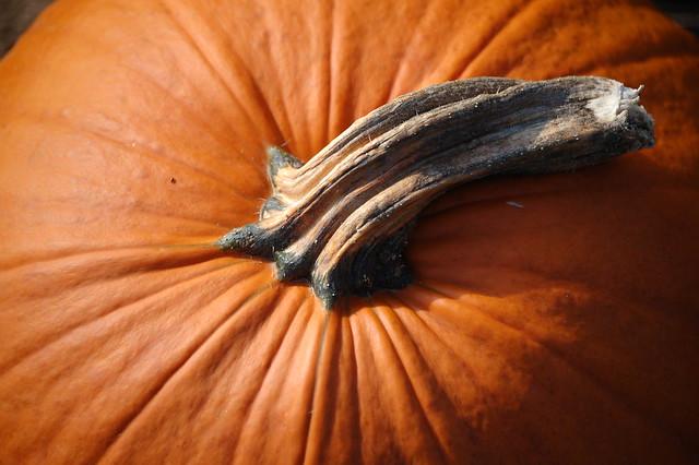 Close Up of Pumpkin
