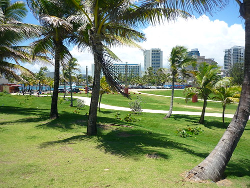 Picnic location between the palm trees
