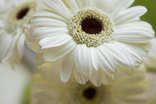 DIY wedding bouquet (by bookgrl)