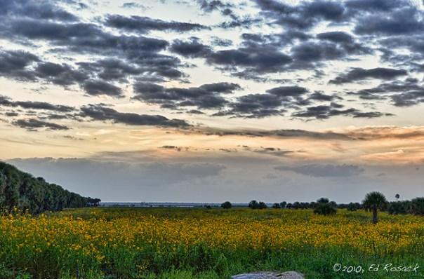 Lake Jesup Wildflowers and Sunrise