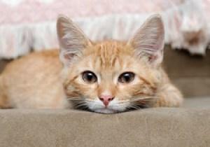 [フリー画像] [動物写真] [哺乳類] [ネコ科] [猫/ネコ] [子猫] [チャトラ] [フリー素材]