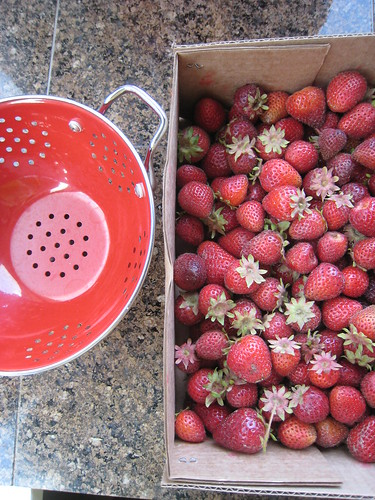 strawberries for jam
