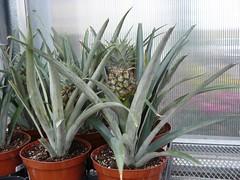 plants @ greengate