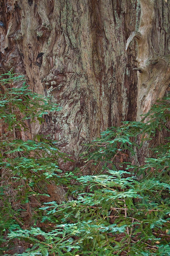 Redwood and Fern by you.