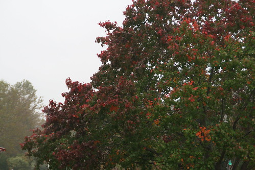 Gray Rainy Fall Day (1/365)