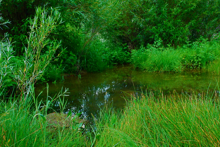Spring-fed pond