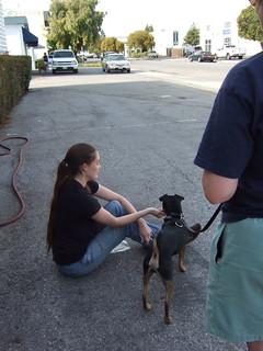 Growly Dog Training