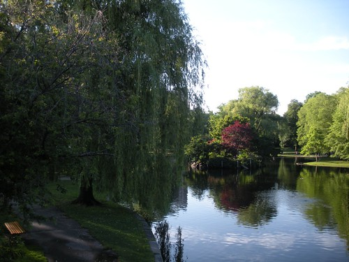 Pond in the Boston Public Gardens